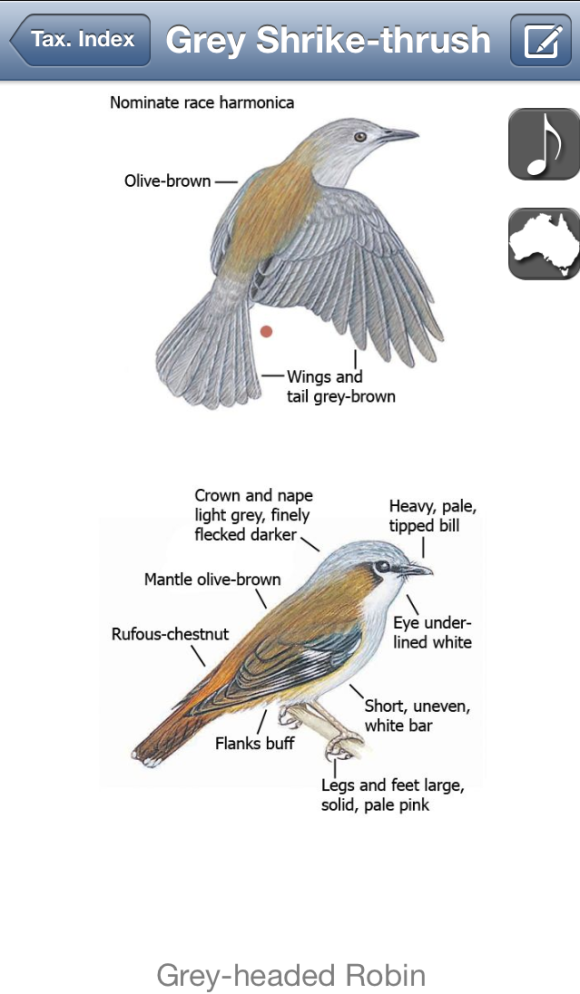 Comparing two grey-ish, brown-ish birds