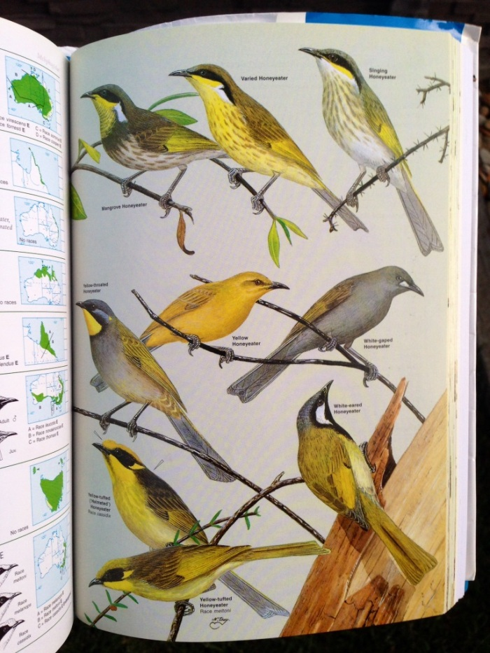 Eight honeyeater species on one page
