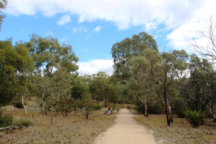 Woodlands walking path