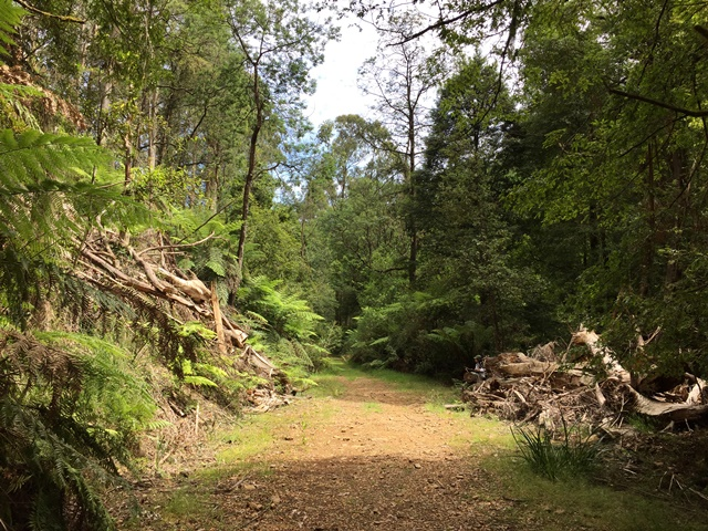 A most productive clearing along the Tanglefoot Track