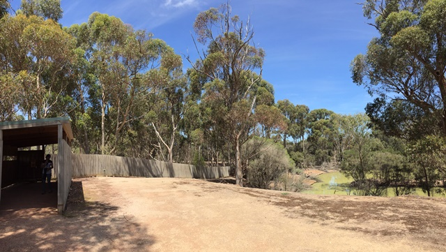 The bird hide and gum trees