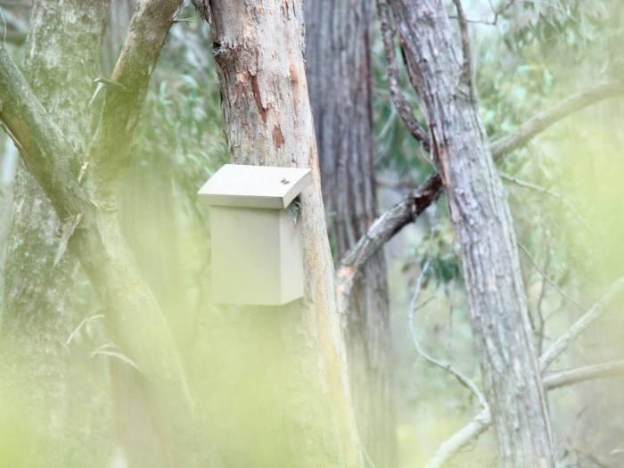 Australian Owlet Nightjar nesting box