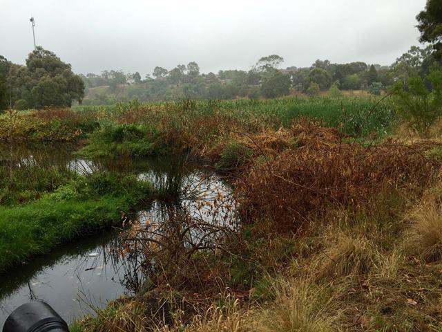 Grotty Pond