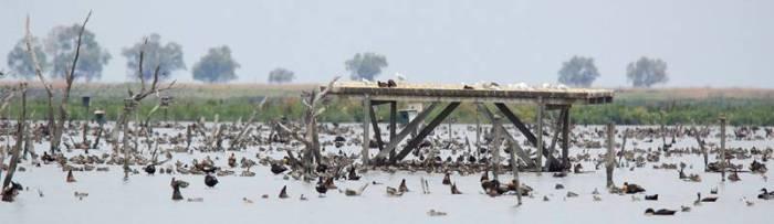 Hundreds of birds
